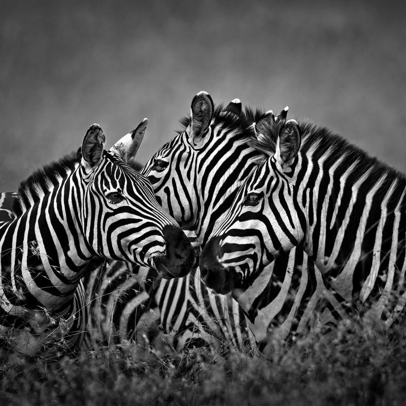 China african animal2